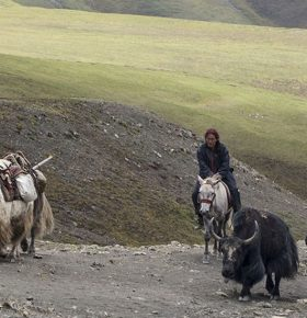 yak caravan trek image