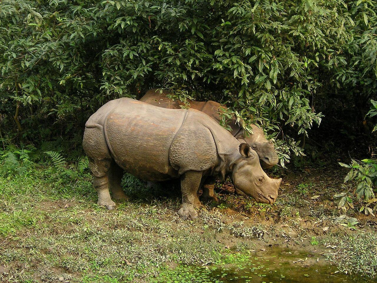 nepal national parks