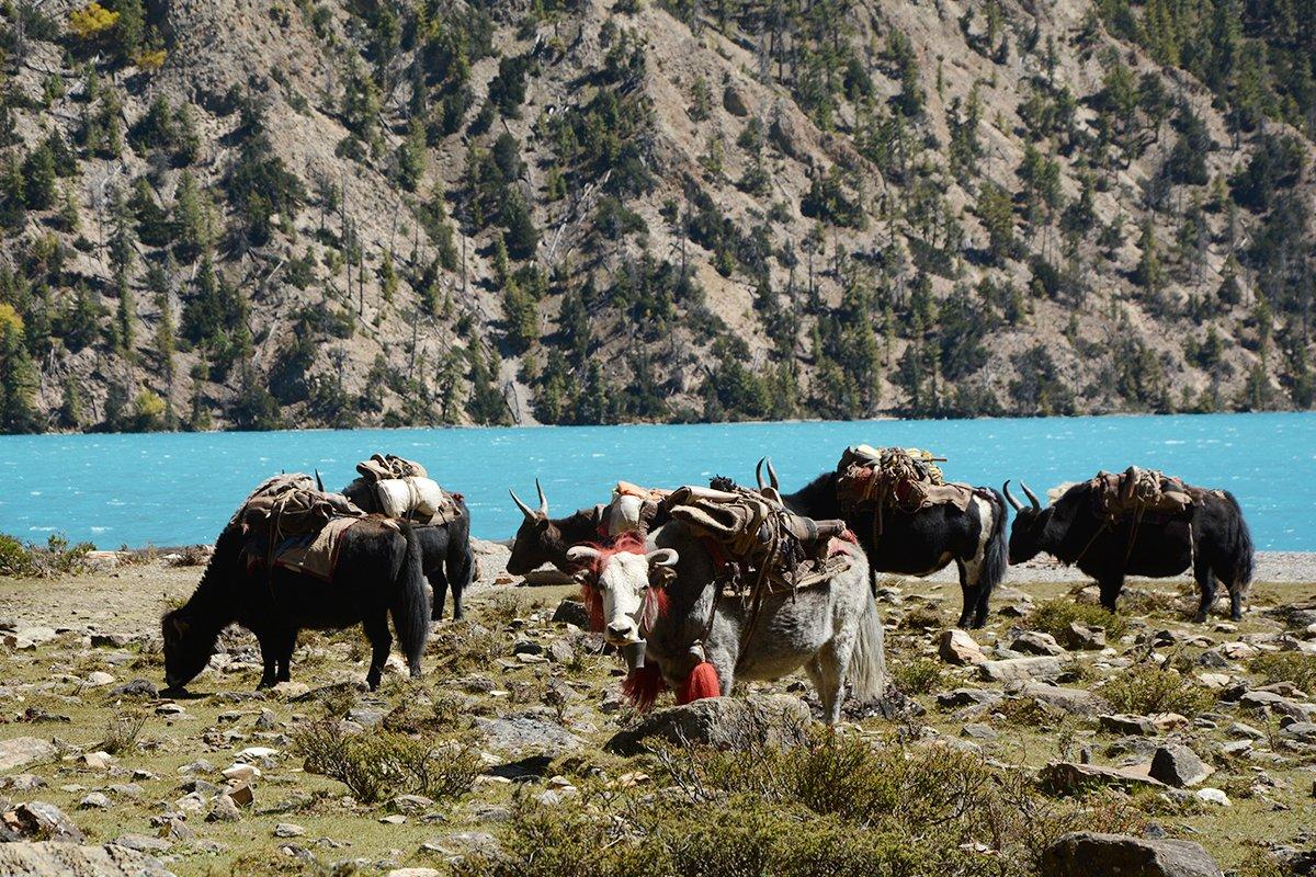 western nepal trekking trails